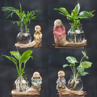 Rich bamboo new Buddha series white palm small potted four seasons green plants indoor bonsai green dill glass bottle flower hydroponics