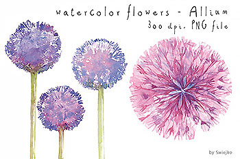 水彩手绘蒲公英插画素材 Watercolor Flowers Floral