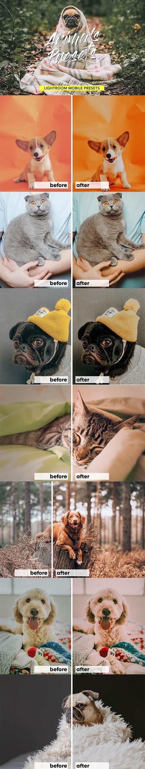 动物/宠物lightroom滤镜lightroom预设下载设计素材模板