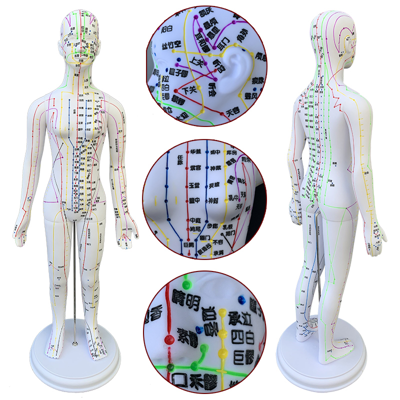 Color Meridian Hard Female Models (hand Can Be Turned) 50cm Medical Characters