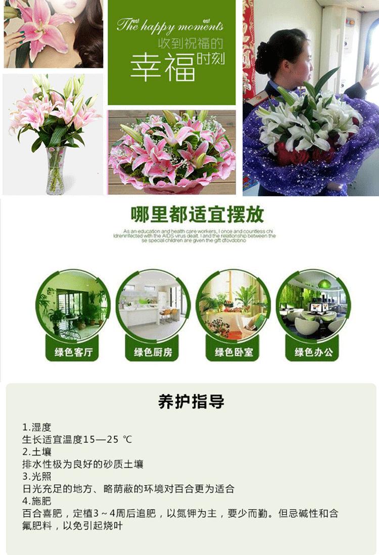 云南新鲜百合花百合花鲜花情人七夕包月室内家庭散装新鲜水养
