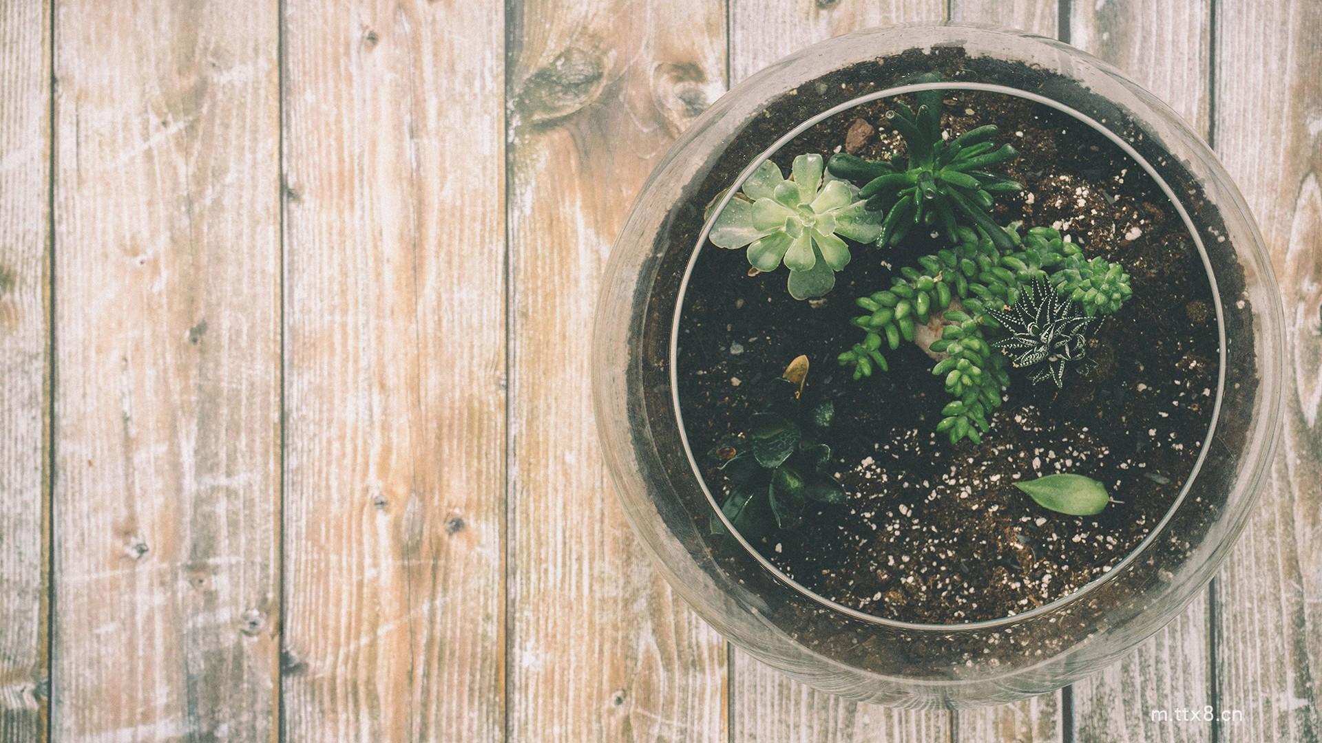 小清新花卉植物盆栽图片大全高清桌面壁纸