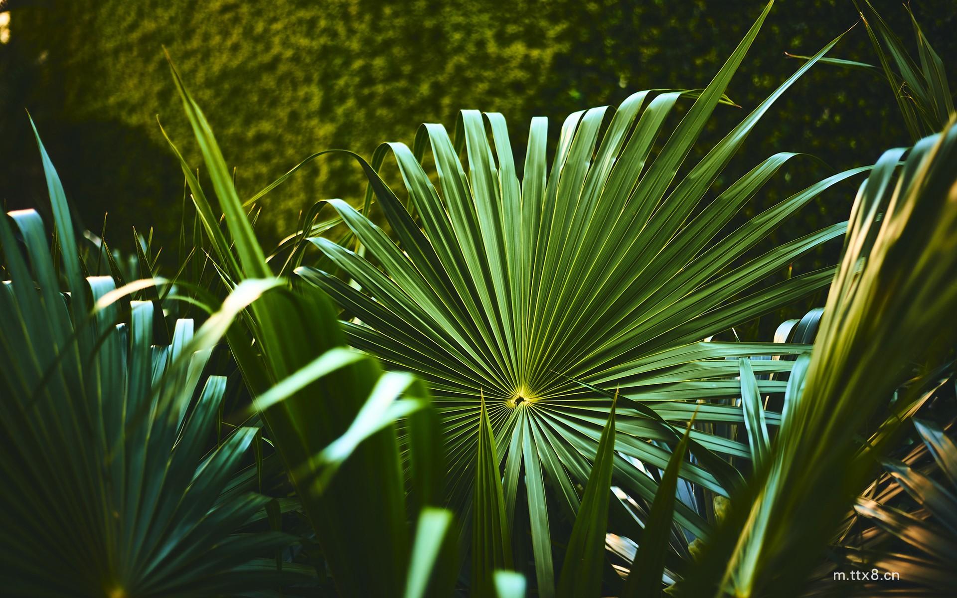 绿色植物风景高清电脑桌面壁纸8.jpg