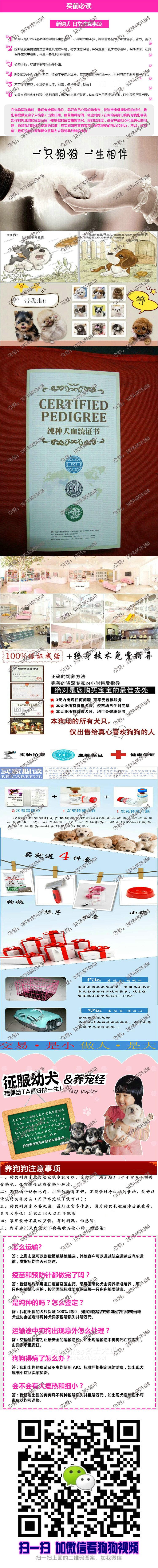 纯种西施犬,韩国引进种犬,诚心想买的联系