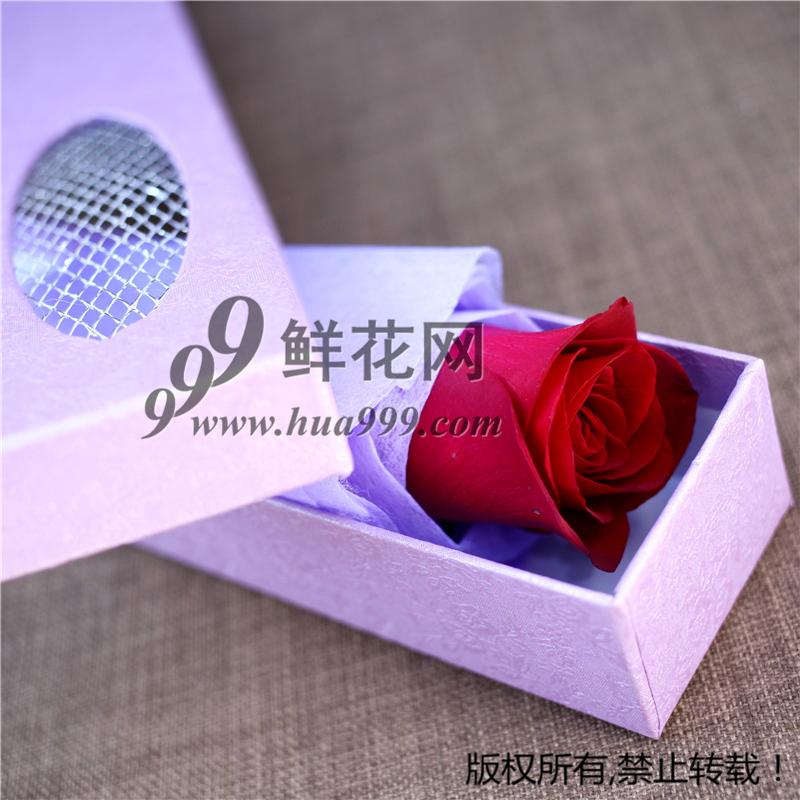 一朵一支红粉白香槟玫瑰单只鲜花速递礼盒全国包邮1朵红玫瑰鲜花