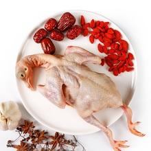 新鲜散养生鲜5年老鸽一只