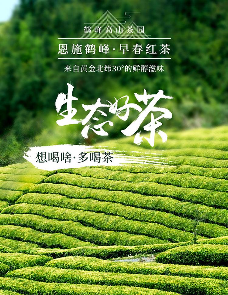 多喝茶茶叶2021午后新春浓香型新茶