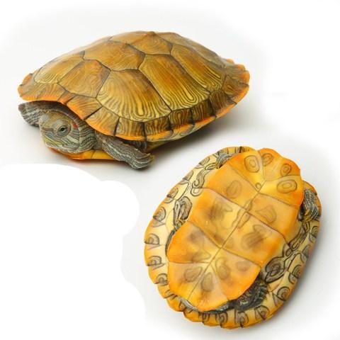 活物乌龟黄金巴西龟活体小乌龟地图龟招财龟彩龟小动物宠物观赏龟