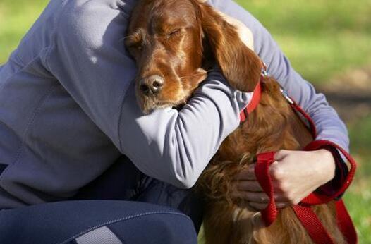 如果狗狗把你当老大,它会有这几种行为