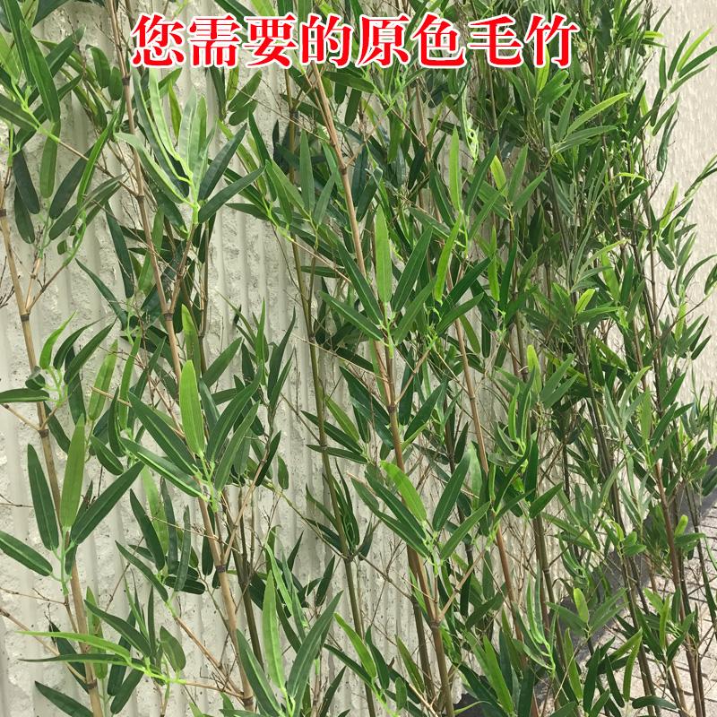 仿真竹子 假竹子装饰隔断屏风原色加密毛竹客厅绿植造景带梢竹子