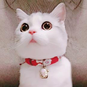 日本和风宠物猫咪小狗狗铃铛项圈