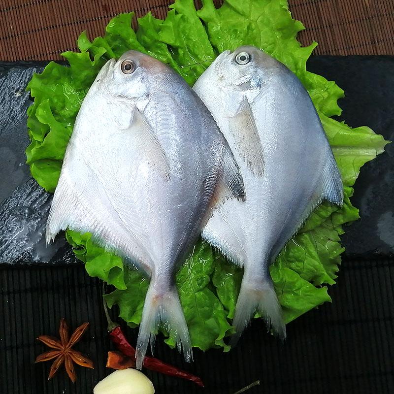 星渔海捕野生银鲳鱼舟山新鲜冷冻海鲜水产冰鲜深海银鲳鱼1斤6-7条