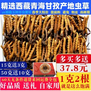 Selected new insect grass dry goods Tibetan 1 g 2 non-high-altitude Tibetan that song Qinghai Yushu winter worm summer grass