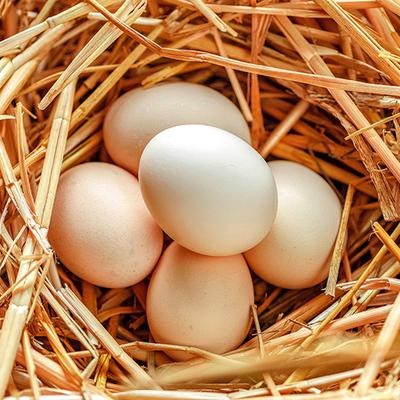 农家山养走地土鸡蛋40枚