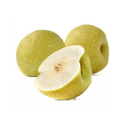 正宗砀山梨应季有机水果现摘新鲜翠皇冠梨雪梨脆甜多汁酥梨 包邮