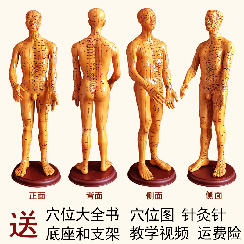 Copper Male Hard Mold Super Clear (hand Can Be Turned) 60cm Medical Characters