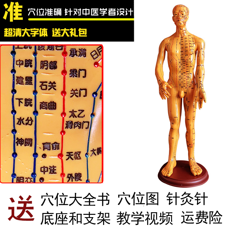 Copper Male Hard Mold Super Clear (hand Can Be Turned) 50cm Medical Characters
