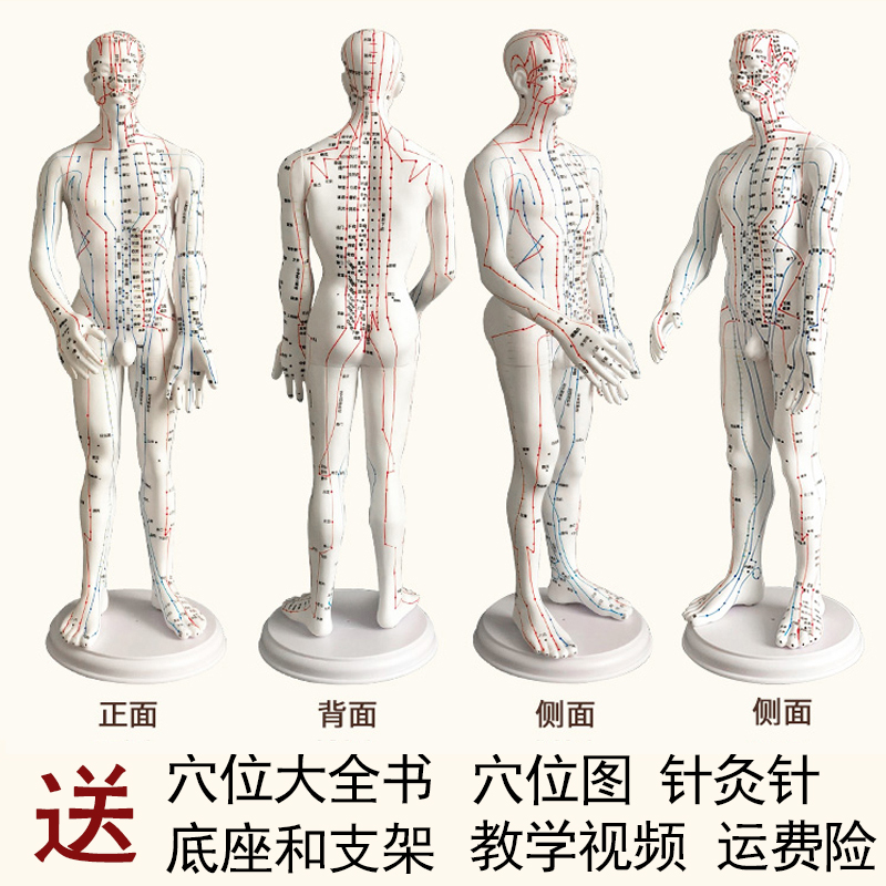 White Male Hard Mold Super Clear (hand Can Be Turned) 60cm Medical Characters