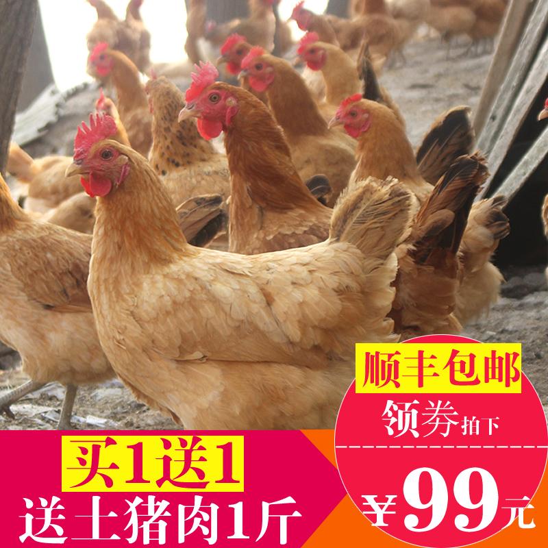 买1送1送猪肉 2年正宗散养土鸡老母鸡农家公鸡乌鸡草鸡笨鸡走地鸡