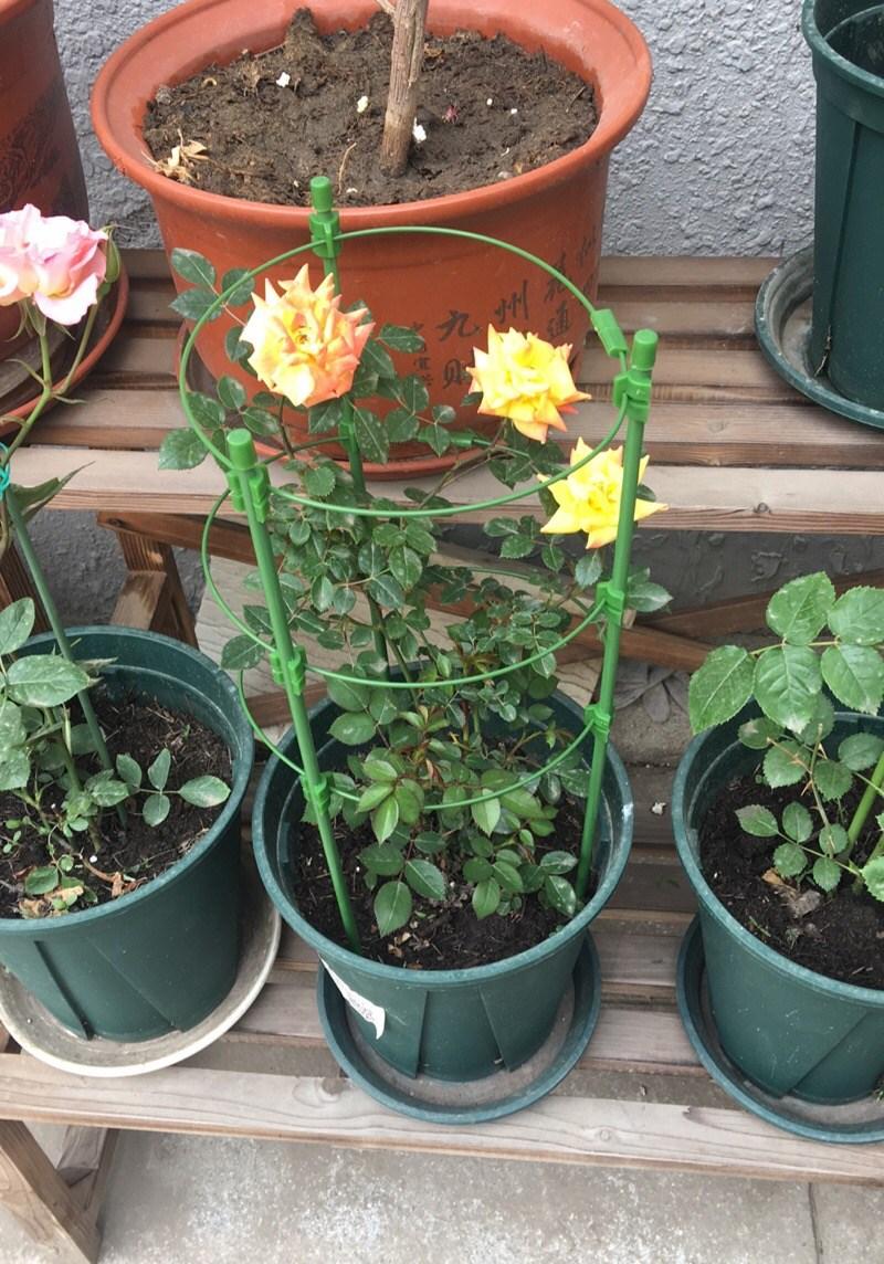 植物爬藤花架喇叭花攀爬网格架子园艺花支架可造型花屏庭院盆栽