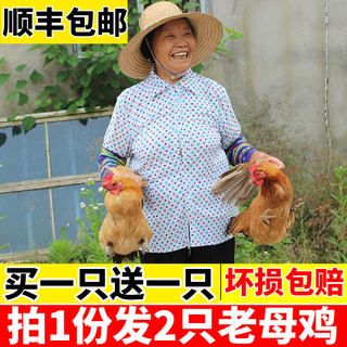 Local chicken, old hen, yuezi chicken, shanchai chicken, Benji chicken, fresh chicken