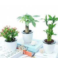 发财树芦荟盆栽富贵竹办公室绿植栀子花虎刺梅室内花卉吸甲醛植物实付6.9元到手包邮