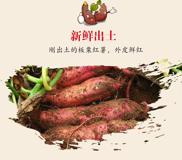 板栗红薯新鲜地瓜黄心现挖烤小香薯软糯蜜薯农家自种番薯5斤包邮商品详情图