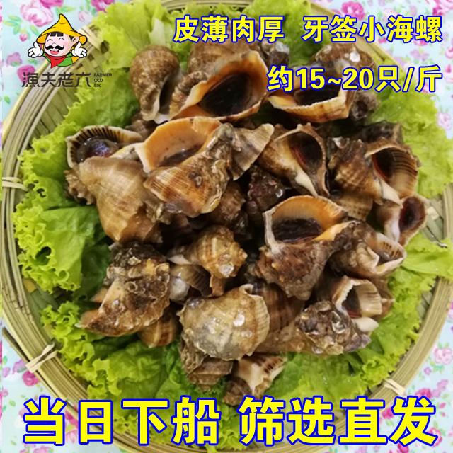 新鲜海鲜牙签渔夫鲜活小海螺花螺贝类螺小海螺包邮500G水产老六