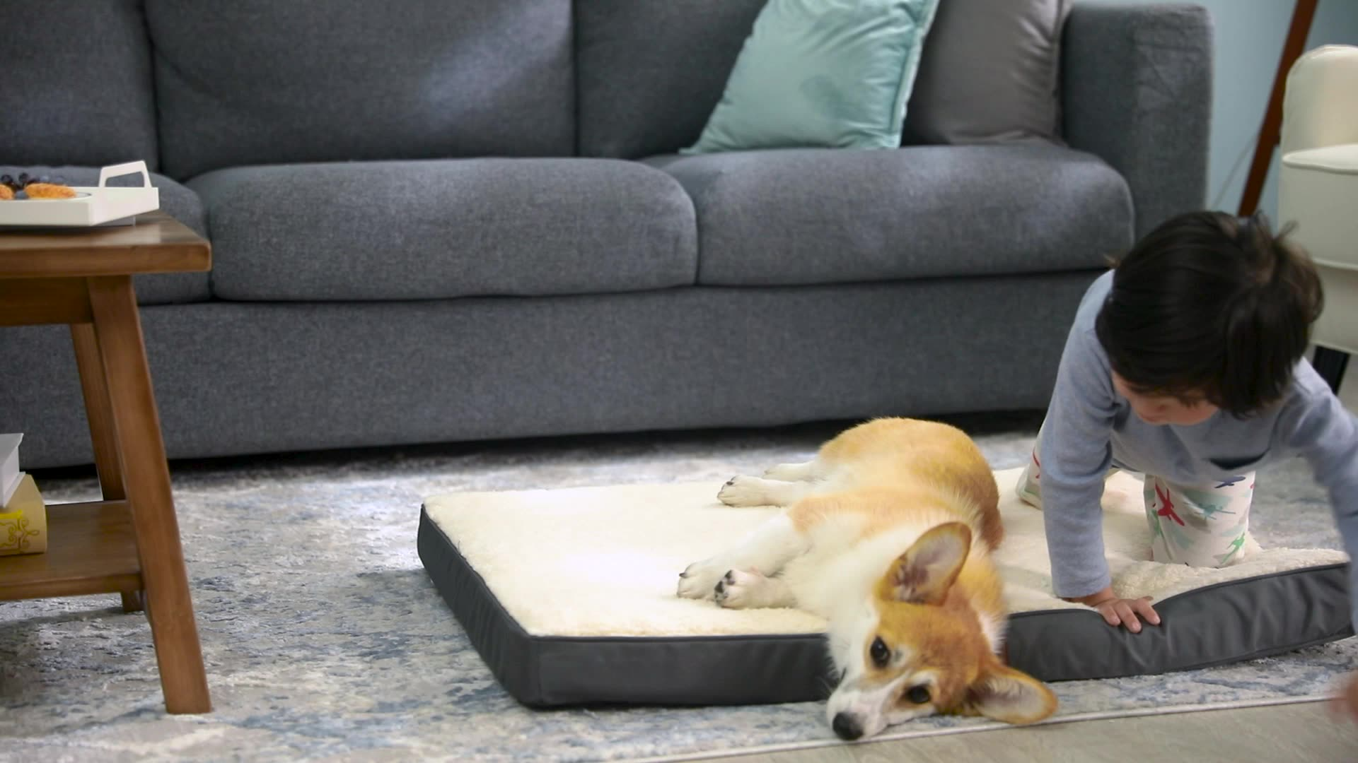 Wholesale Travel Sniffing High Density Memory Foam Sleeper Pet Mat Dog Bed