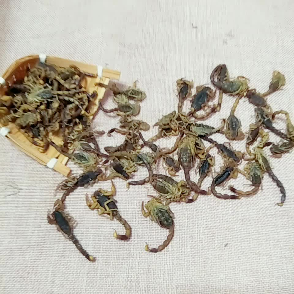 Chinese Factory Wholesale Quan xie dried Scorpion