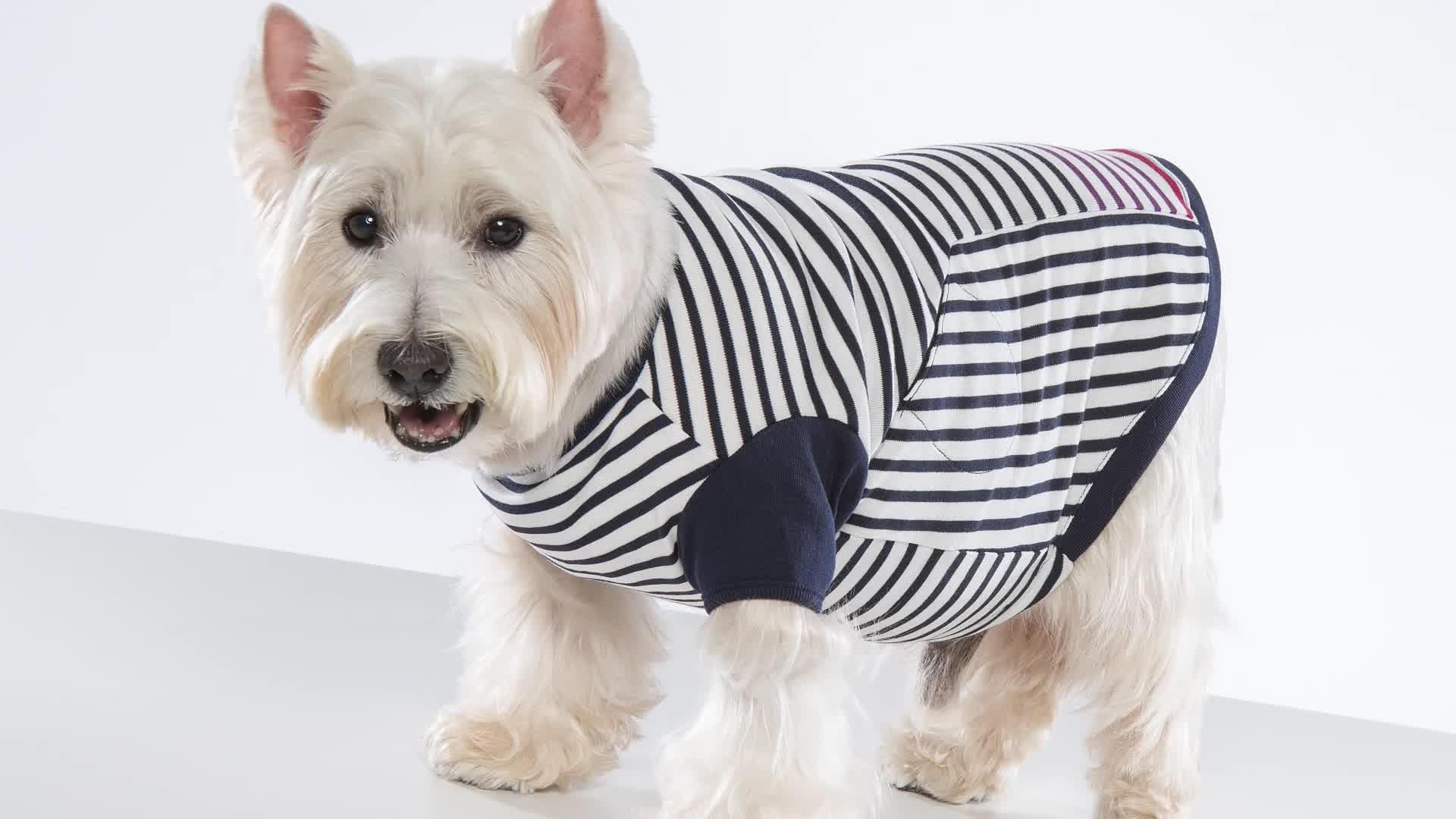 Animali domestici Piping Disegni A Righe Vestiti Con Scollo A V
