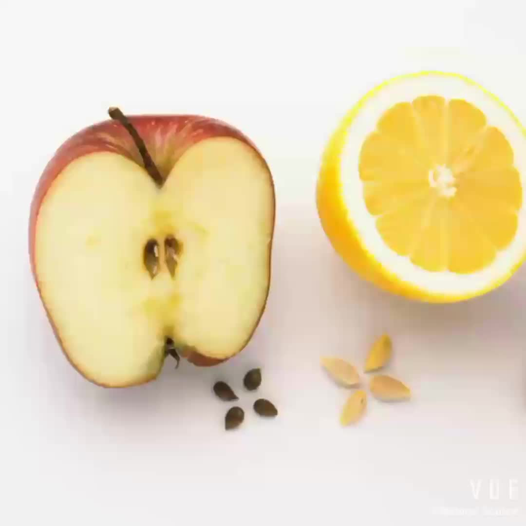 Factory Supply Best-Selling New Harvested Fresh Apple Seeds For Sale Planting