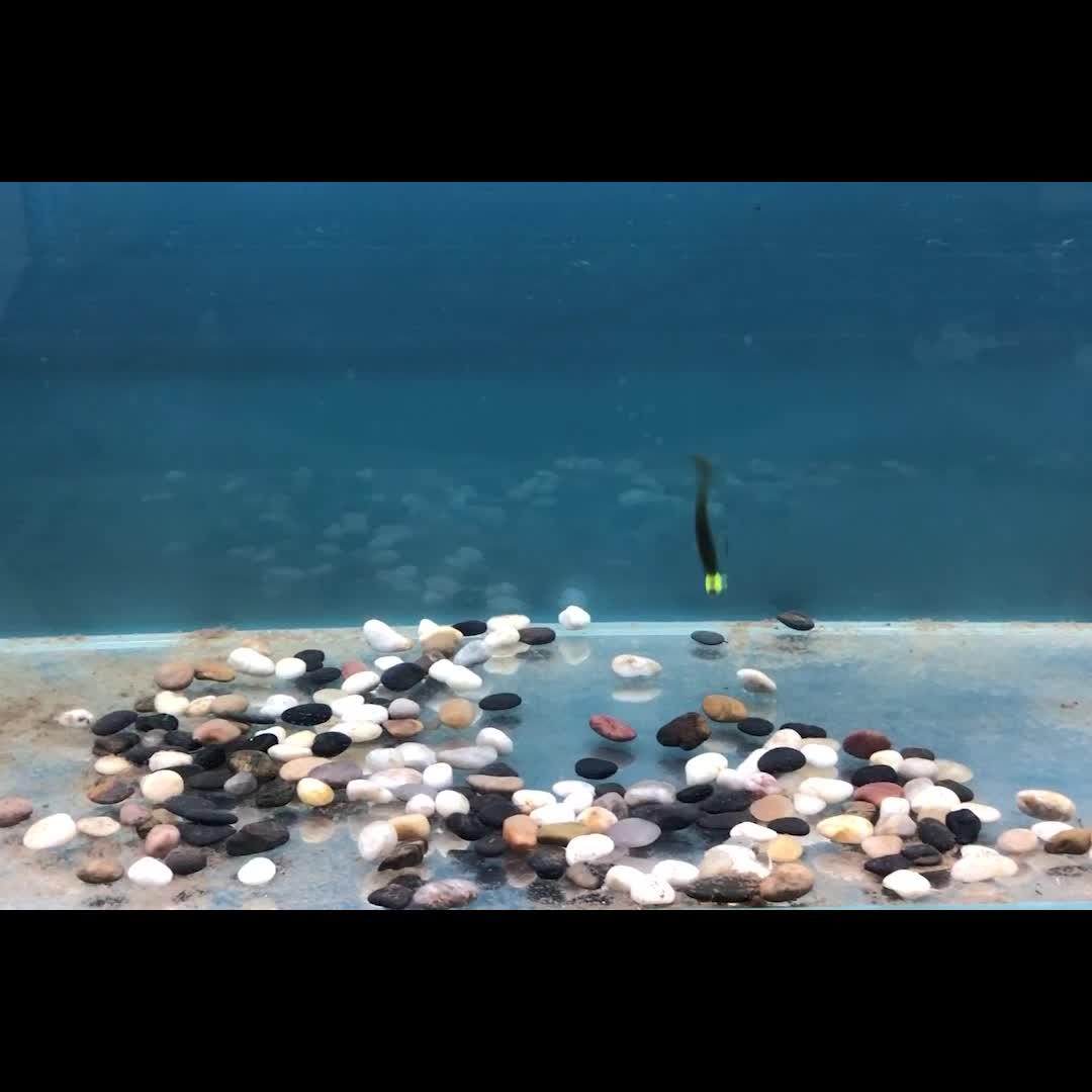 RUNCL Multi-farbige Weiche Fisch 75mm Weiche Kunststoff Bionic Schwimmen Köder