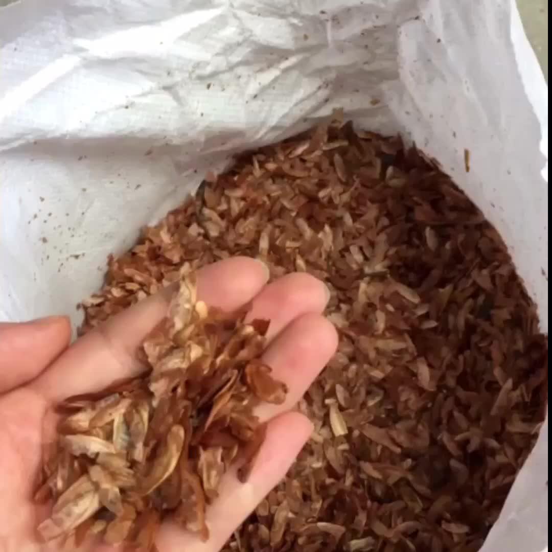 Шанхай herbary оптовая продажа toona sinensis семян, свежие семена microgreens