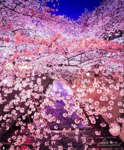 2018年日本赏樱全攻略,美到心醉!