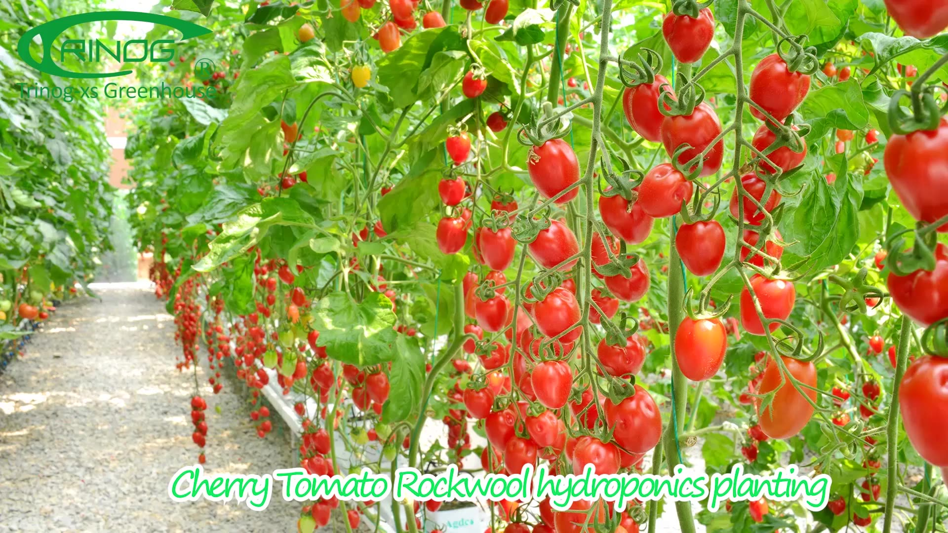 Kommerziellen gemüse kirsche tomaten komplette hydrokultur systeme für verkauf