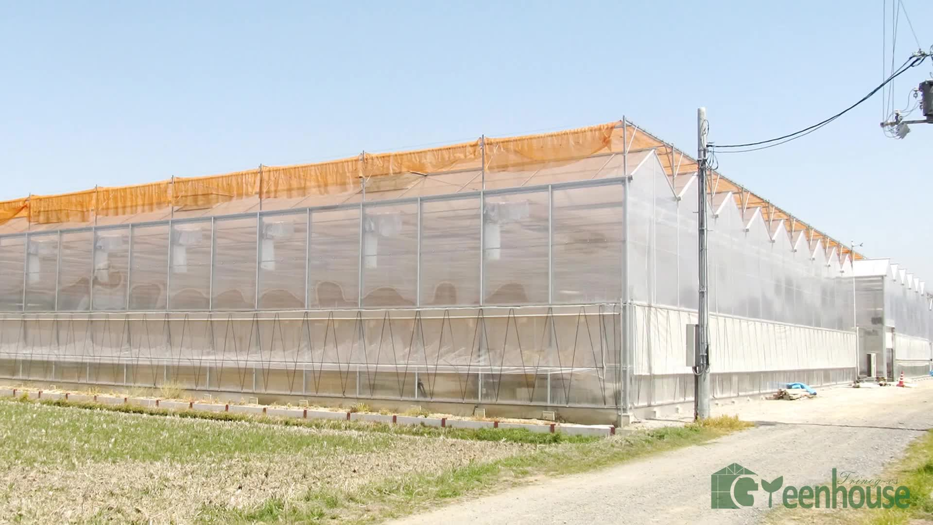 Completed commercial used polycarbonate greenhouse for tomato cultivation