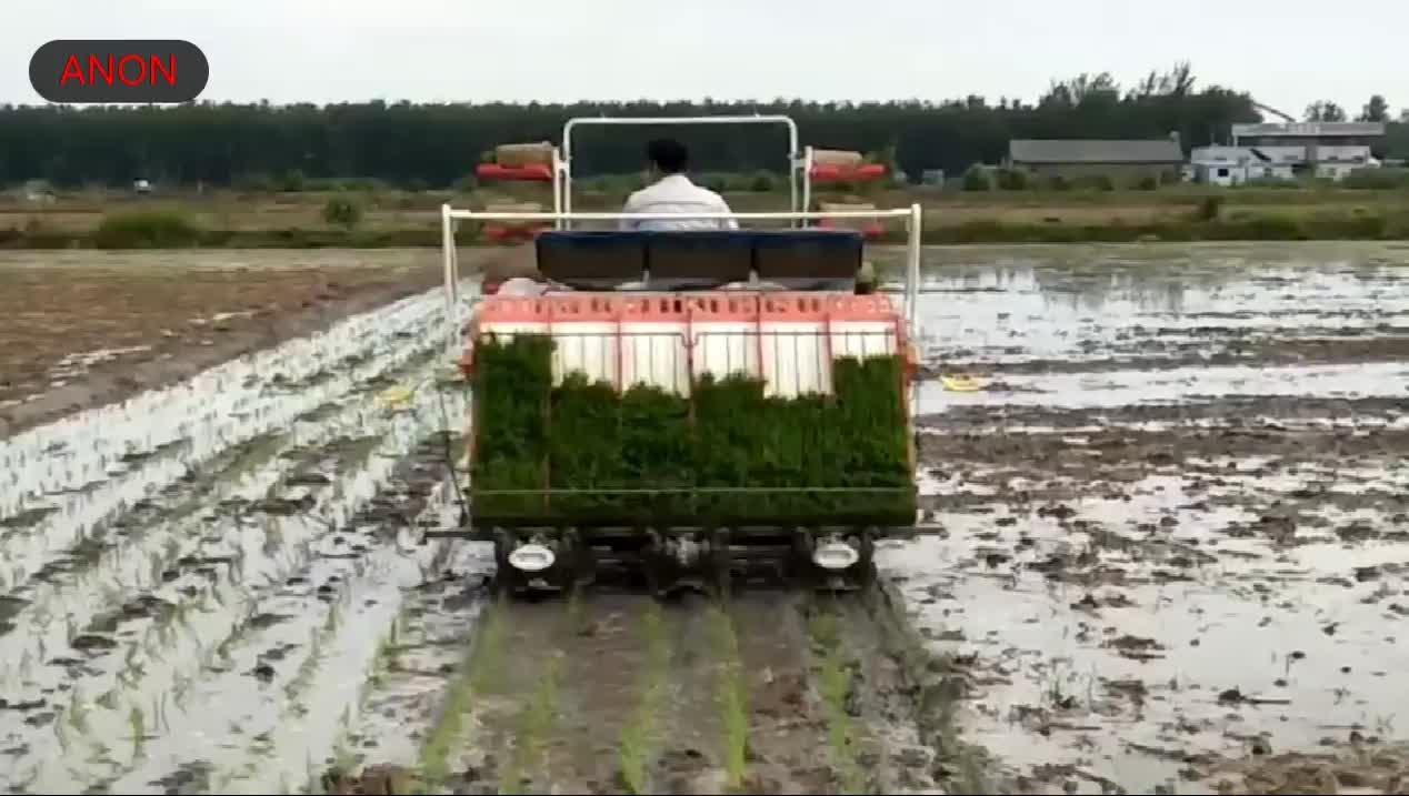 Transplantador de arroz filipino con 4 ruedas, tipo 6 filas, precio del transplantador de arroz de ANON