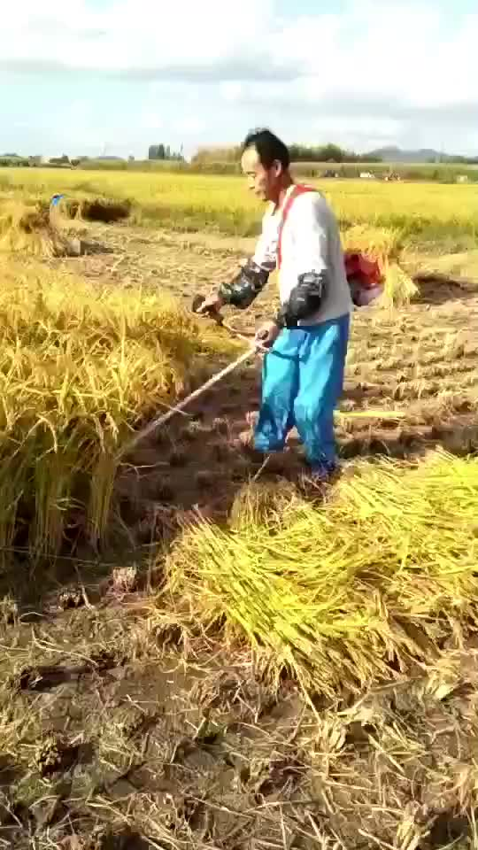 Two stroke 52cc gasoline paddy cutter mini rice paddy harvester