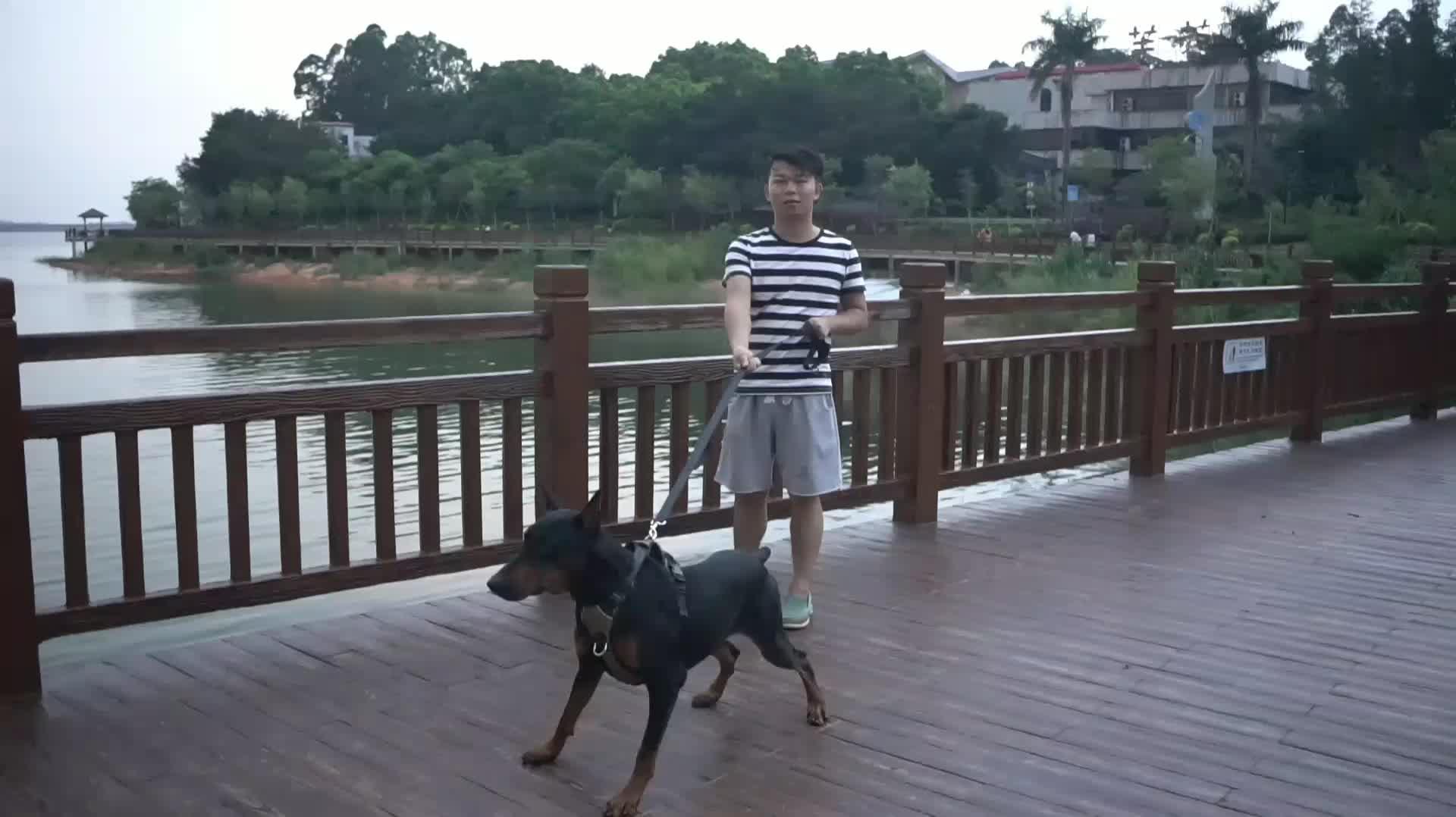 Lovoyager चीन कारखाने रखता पालतू पशु उत्पादों हवा जाल कुत्ते दोहन और पट्टा सेट