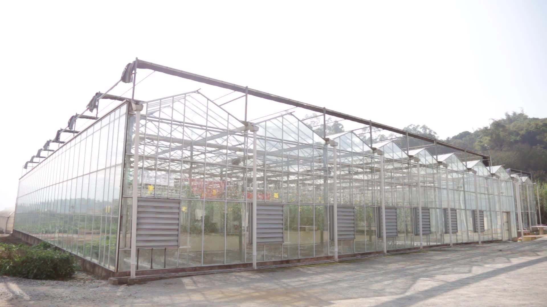 Dutch style Prefabricated venlo glass hydroponic greenhouse for egg plant