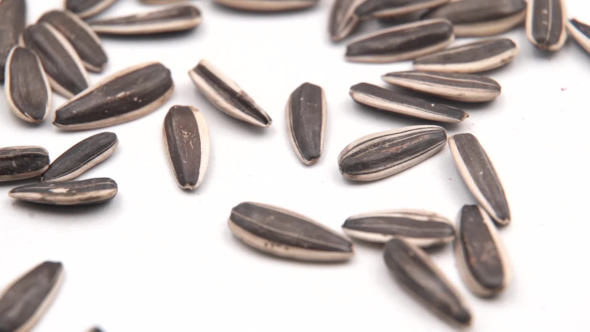 Hot selling chinese top quality sunflower seeds 363!