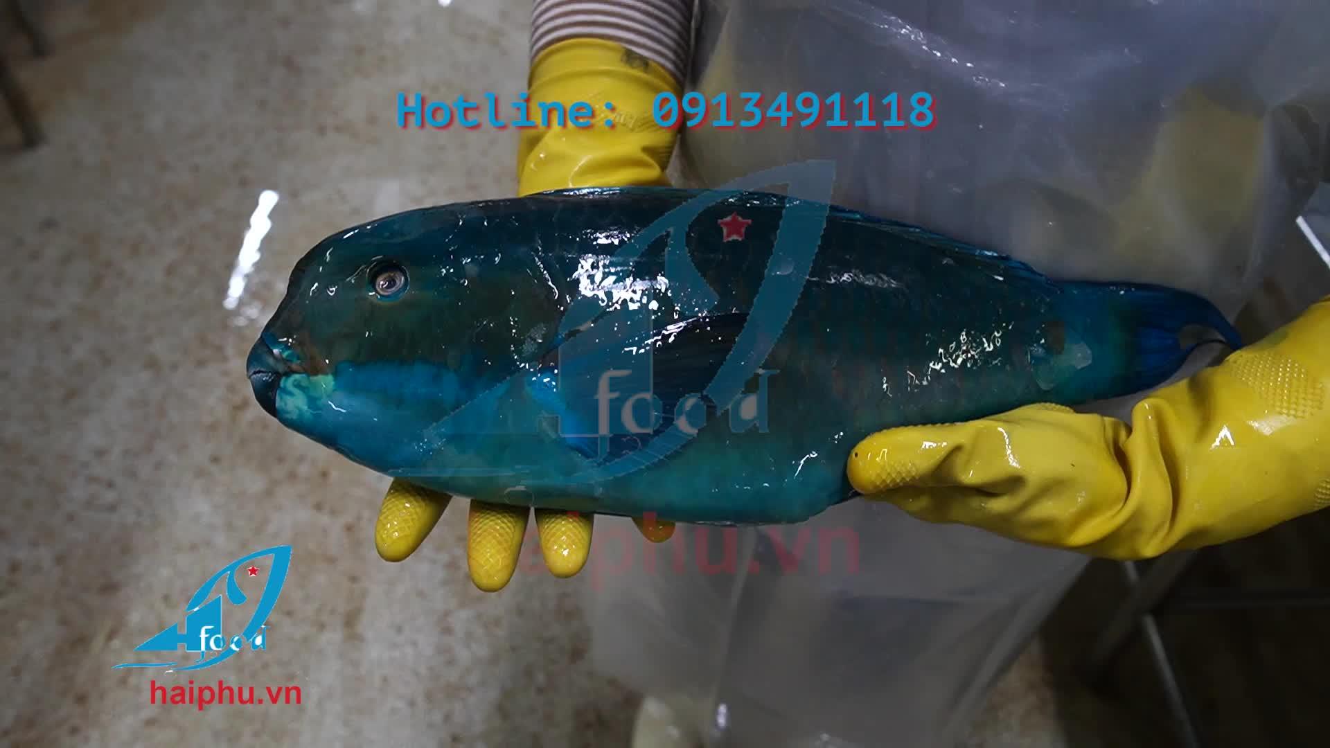Terbaik Penjual Beku Ikan Produk Hai Phu Perusahaan dengan Iqf Beku Metode Quang Ngai Vietnam