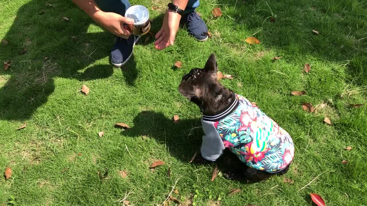 2020 fashionable warm autumn and winter small dog hoodies  clothes