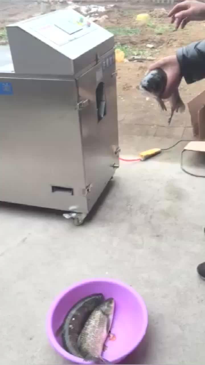 automatic fish cleaning and killing machine small fish gutting machine