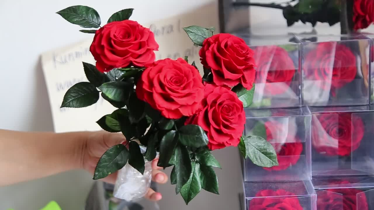 7-9cm Preserved Rose With 20cm Long Stem can be do preserved rose in glass dome