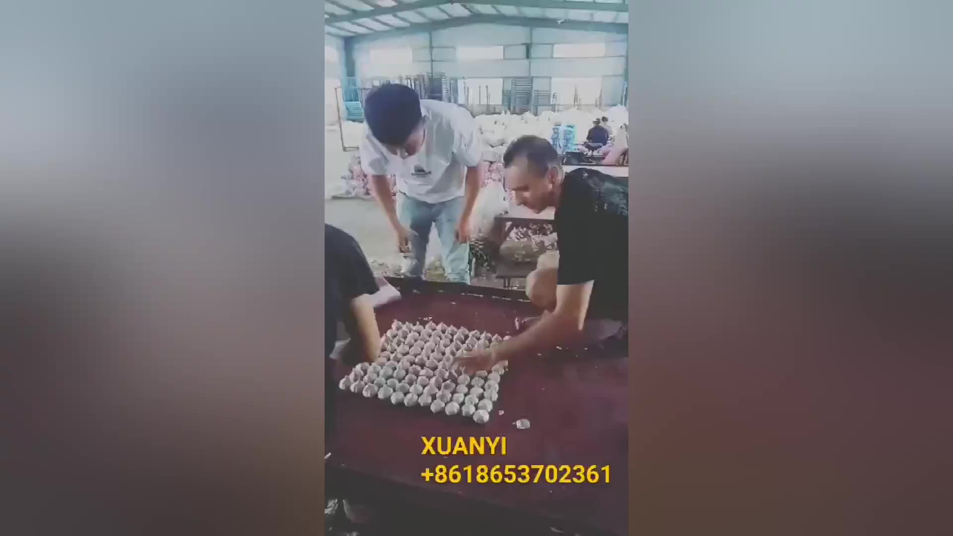 2020 Nieuwe Crop China/Chinese Verse Witte Knoflook Prijs In Thailand