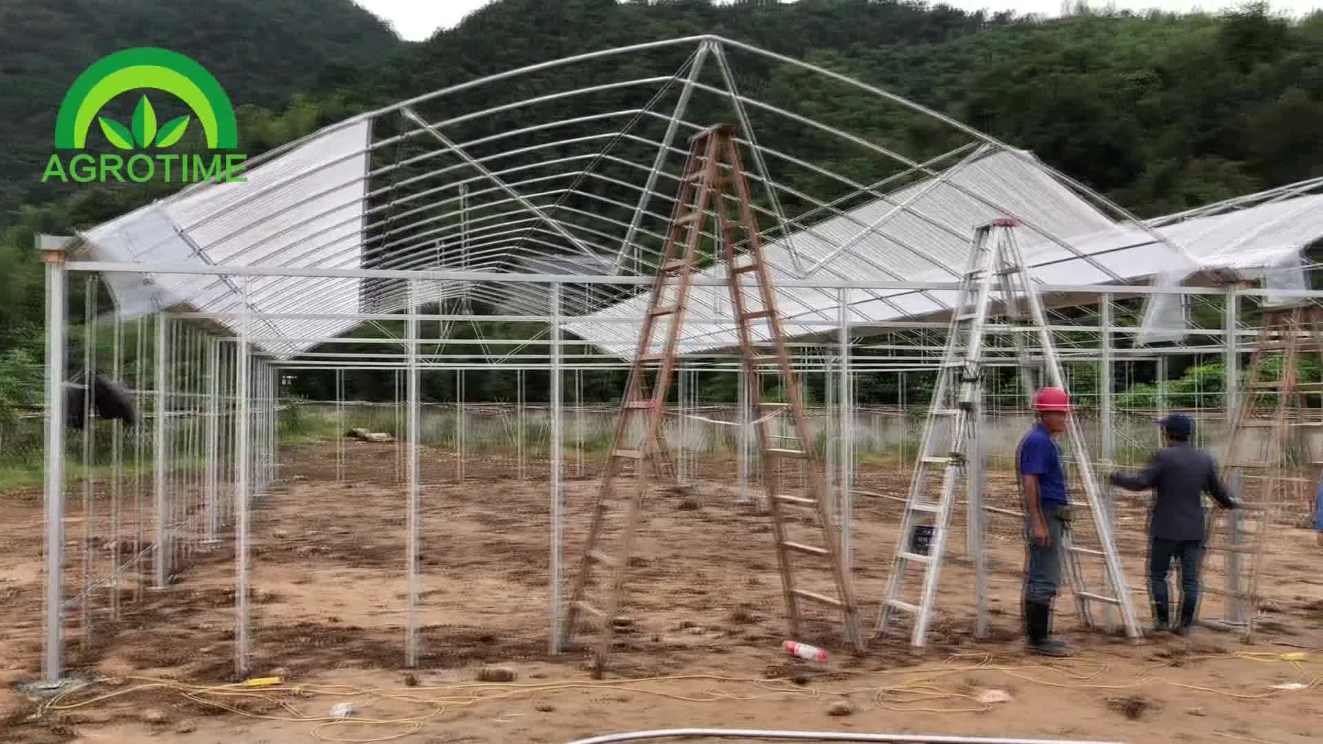 Agricultural Commerical steel structures multi span greenhouse with Hydroppnic system for strawberry plant