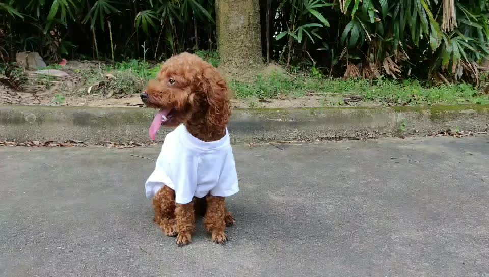 Lovoyager Family pet clothing summer dog clothes  blank cotton dog t shirt for wholesale