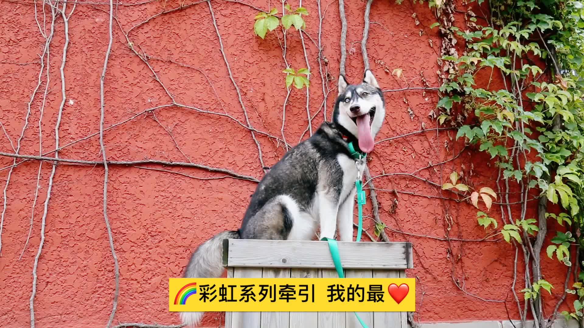 HiDREAM Cầu Vồng Dog Leash-bán buôn new phong cách chất liệu nylon dây xích chó